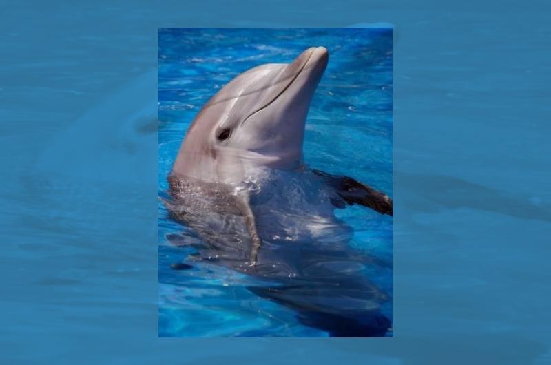 I delfini birichini