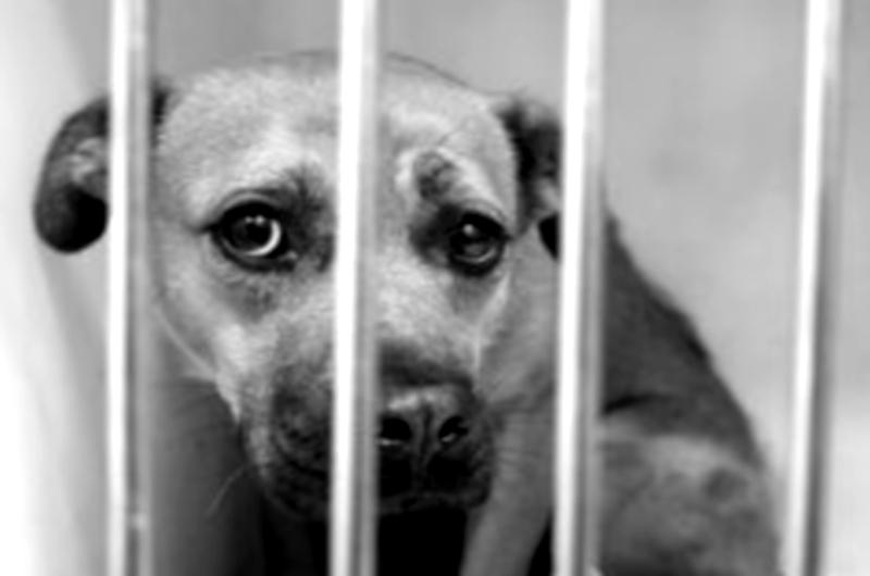 ''LA VIOLENZA SUGLI ANIMALI È L'ANTICAMERA DELLA VIOLENZA SULL'UOMO'' (OVIDIO) <br>    <span> Intervista a Francesca Sorcinelli, educatrice, presidente di LINK-Italia </span>  <br> 🔊   Puntata 418