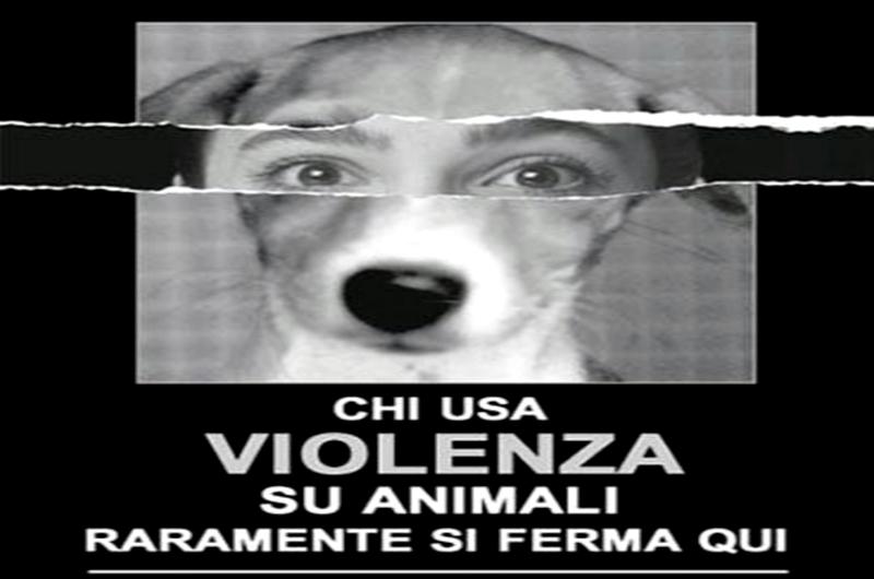 LA VIOLENZA SUGLI ANIMALI È L'ANTICAMERA DELLA VIOLENZA SULL'UOMO <br>    <span> ''La violenza sugli animali è l'anticamera della violenza sull'uomo'' </span>  <br> 🔊   Puntata 448