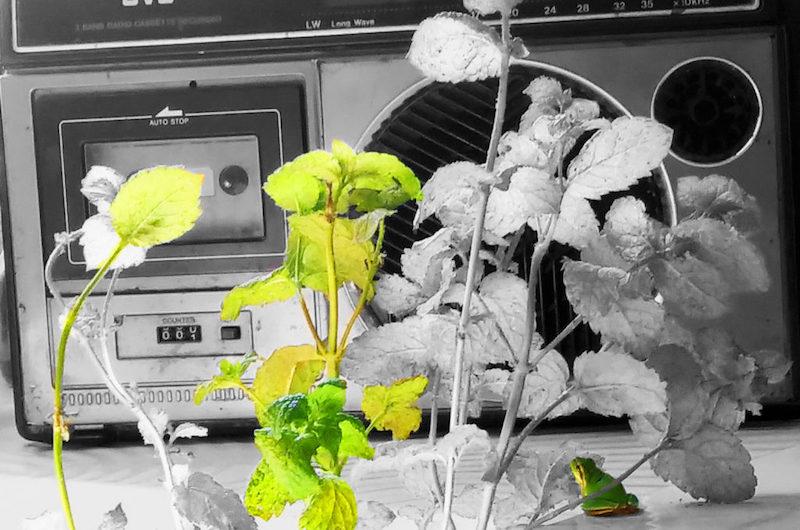 Radio Grenouille <br>    <span>  L'arte è una follia mentale</span>  <br> 🔊    Puntata 629